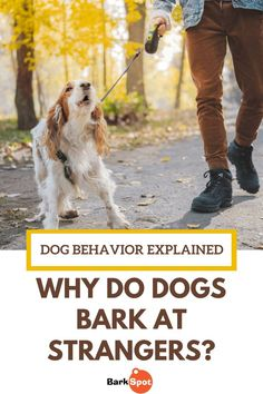 Dogs bark at strangers for a number of reasons. Before you can correct the behavior, you have to understand what's causing it. Puppy Stages, Training Your Dog, Training Tips, Dog Facts, Dog Barking, Cute Dogs And Puppies, Dog Behavior, Little Dogs, Dog Care