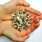 In verschiedenen Farben, Formen und Größen gibt es Samen und Kerne zu kaufen. Sie zählen längst nicht mehr nur zum Vogelfutter, denn immer mehr Menschen wissen, wie gesund es ist, diese auf den täglichen Speiseplan zu setzen, deswegen ist man ja auch, wenn man sich wohl fühlt und nicht krank ist, KERNgesund. Samen und Kerne
