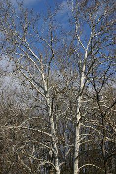 Trees worth their Bark at www.fiskars.com