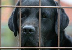 cane in un canile