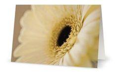 Cream Gerbera 5x7 Blank Card  Perfect for by PatrickRabbatPhotos, $3.25
