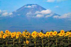 "expressions-of-nature: "" by Shinichiro Saka Mount Fuji, Japan """