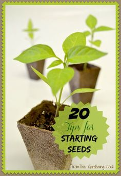 Get a head start on spring with these 20 seed starting tips. Your garden will look great in a few months and it's much cheaper than buying seedlings or plants.