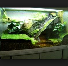 Terrarium with water features - clever use of a small space! Edit: I could do something like this if I owned Sally's or toads Reptile Room, Reptile Cage, Reptile Enclosure, Frog Habitat, Turtle Habitat, Paludarium, Vivarium, Aquarium Terrarium, Planted Aquarium