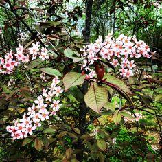 Au printemps la renaissance Renaissance, Plants, Spring, Flora, Plant, Planting