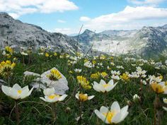 "And the flowers in the wind mixed with other  flowers, only man is always alone. "" - Nura Bazdulj-Hubijar #quotes,,,Prenja Mountain,,,,,,#Bosnia and Herzegovina"