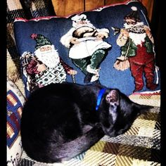 Him cuddled up to my Santa pillow when It was still near Christmas time lol #black #cat # kitten #kitty #babyboy #blackcat #blackkitty #blackkitten #yelloweyes