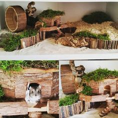 Natural habitat for hamster Robo Hamster, Hamster Life, Hamster Toys, Hamster Stuff, Hamster Natural Habitat, Hamster Habitat, Cool Hamster Cages, Gerbil Cages, Terrarium Hamster