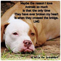 So true! #truth #dogs #animals