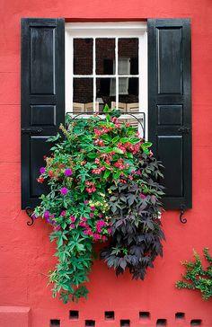 more Charleston window box displays...