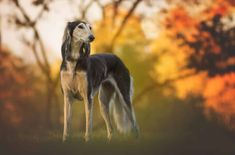 The prices for different dog breeds vary widely, but some breeds fetch higher prices than others. See our list of the most expensive dog breeds here! Friendly Dog Breeds, Most Expensive Dog, Different Dogs, Large Dog Breeds, Animals Of The World, Happy Dogs, Beautiful Dogs, Dog Friends, Dog Training