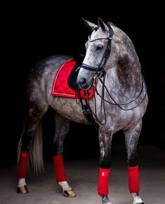Ohhh red saddle pad and bandages! They look stunning on this grey horse Pretty Horses, Horse Love, Beautiful Horses, Big Horses, Horse Barns, Horse Tack, Horse Stalls, Dressage, Dapple Grey Horses