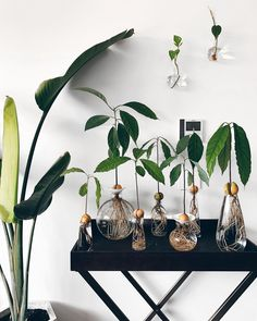 Love the avo gang! Indoor Planters, Diy Planters, Indoor Garden, Home Interiors And Gifts, Decoration Plante, Bedroom Plants, Green Life, Green Plants, My New Room