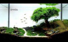 Live Plant For Plastic Acrylic