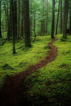 woodland path, British Columbia  Found on www.flickr.com via Tumblr