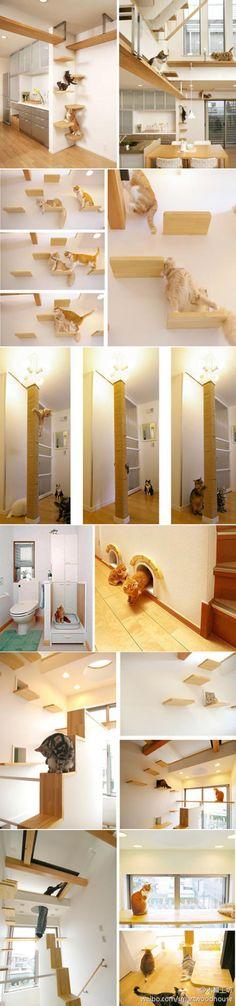 哇,还有专门给猫咪们设计的房子!