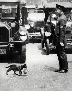 Yavrusunu taşıyan kedi için trafiği durduran trafik polisi.