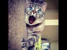 Hauskat Kissat Lokakuu 2016 - Funny Cats October 2016