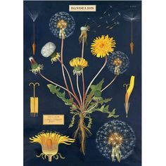 Dandelion Chart Wrapping Paper / Poster from Present Indicative