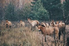 Chernobyl Has Transformed into an Incredible Nature Reserve Now Open to the Public Plant Species, Bird Species, Lynx, Chernobyl Nuclear Power Plant, Reserva Natural, Thrive Life, Nuclear Disasters, Fauna, Nature Reserve