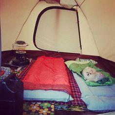 @Mie_Ponkichi : 今回の寝床 アメニティードームM  #pomeranianlove #pomeranian #poco #pom #camp #kurosakaautocamp 黒坂オートキャンプ場https://t.co/VBbjpQWe54
