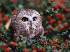 https://i.pinimg.com/736x/5f/76/23/5f762320d089fb60d172a4156fb877d4--owl-wallpaper-photo-wallpaper.jpg