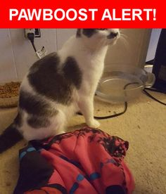 Please spread the word! Smudge was last seen in Marysville, WA 98271.    Nearest Address: Willow Drive, Marysville, WA, United States