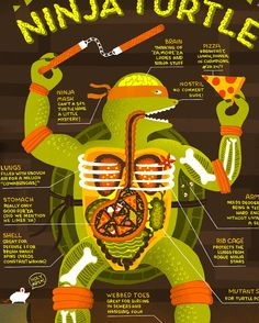 Rachel Ignotofsky Design - The Anatomy of a Ninja Turtle