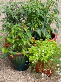 Planting Ideas and Garden Maintenance   HGTV