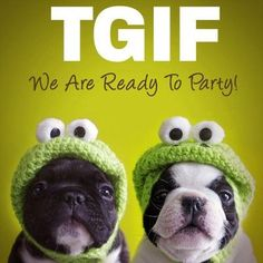 They're ready. Are you? Happy #Friday!!! #TGIF #Dogs #Funny