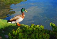 How to Dig a Large Backyard Pond