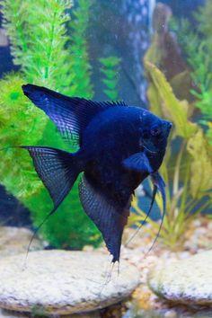 Aquarium Care for Freshwater Fish Tropical Fish Aquarium, Tropical Fish Tanks, Underwater Creatures, Ocean Creatures, Underwater World, Tropical Freshwater Fish, Freshwater Aquarium Fish, Aquascaping, Tropical Fish