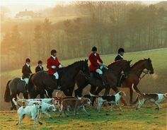 A group of proud horses set off on a misty morning with an equally amicable pack of hounds and riders.