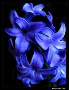 Blue Flower by ~Mirlenges on deviantART