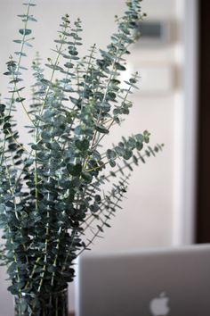 eucalyptus (my favorite fragrance)