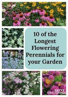 For non-stop color, plant the longest flowering perennials in your garden! For non-stop color, plant the longest flowering perennials in your garden! For non-stop color, plant the longest flowering perennials in your garden! Garden Shrubs, Shade Garden, Lawn And Garden, Flowering Shrubs, Garden Gazebo, Mailbox Garden, Garden Grass, Garden Pallet, Pallet Patio