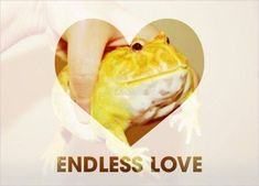 love is stored in the frog Kalluto Zoldyck, Cute Frogs, Endless Love, Frog And Toad, Reptiles And Amphibians, I Am Awesome, Cute Animals, Naruto, Goblin