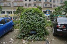 Une voiture abandonnée recouverte par la vigne - http://www.2tout2rien.fr/une-voiture-abandonnee-recouverte-par-la-vigne/