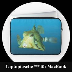 Design::Ute Niemann (@redbubble_ute_niemann) • Instagram-Fotos und -Videos Fish, News, Instagram, Videos, Design, Animals, Underwater Art, Animales, Animaux