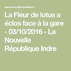 La Fleur de lotus a éclos face à la gare - 03/10/2016 - La Nouvelle République Indre