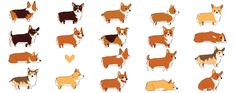 A lot of corgis by olliewhen.deviantart.com on @deviantART