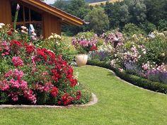 Rosen, Tulpen, Nelken – euer Blumenbeet soll klassisch und wunderschön erstrahlen? Dann solltet ihr unsere 6 wertvollen Tipps zu Blumenbeeten befolgen!