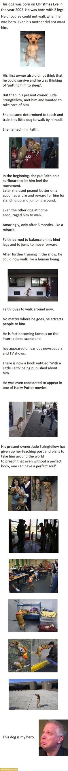 Amazing!!! The owner of this dog should be rewarded! <3