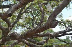 #樹木医 #点滴 #治療 #樹木 (Via: インドの樹齢700年の大木がシロアリに襲われ、点滴治療を受ける ) ほぉ...シロアリにボロボロにされた樹齢700年の木に生理食塩水を注入だって。 樹木医さん御用達の土ほぐし機なら、エアースコップを!