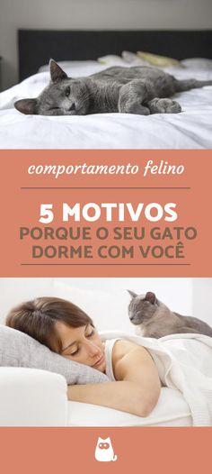 O seu felino DORME JUNTINHO A VOCÊ? Descubra todas as razões que explicam esse comportamento no artigo Porque o seu gato dorme com você - 5 motivos!  #peritoanimal #gatos #pets #animais #mundoanimal #cuidados #comportamento