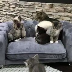 Baby Animals, Funny Animals, Cute Animals, Kitten Gif, Cat Gif, Baby Kittens, Cats And Kittens, Crazy Cat Lady, Crazy Cats