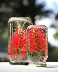 Bottle brush in a jar of water table decorating - Table Settings Christmas Decorations Australian, Christmas Table Decorations, Flower Decorations, Aussie Christmas, Australian Christmas, Christmas Diy, Xmas, Christmas 2019, Christmas In Australia