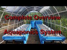COMPLETE AQUAPONICS SET UP - Start to Finish - YouTube