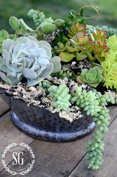 HOW TO PLANT SUCCULENTS-planting succulents-stonegableblog.com