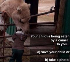Help! Please Take A Picture My Child Is Being Eaten By A Camel - Parenting Fail ---- hilarious jokes funny pictures walmart humor fails